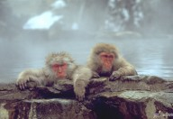 Snow Monkey 1 Day Tour from Nagano
