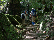 Mt. Fuji, Forest & Cave Exploring 1 Day Tour