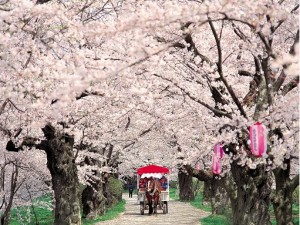 2021 Small Group 9 Day Cherry Blossom of Northern Japan
